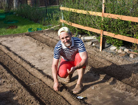 seed bed: Spring works in the garden  Sowing vegetable crops