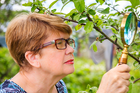 Woman examines a branch of an apple tree in search of pests photo