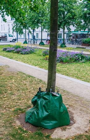 A Treegator watering bag around a  tree in the  city.  Copenhagen, Denmark Foto de archivo