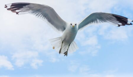 Seagull flying against cloudy sky