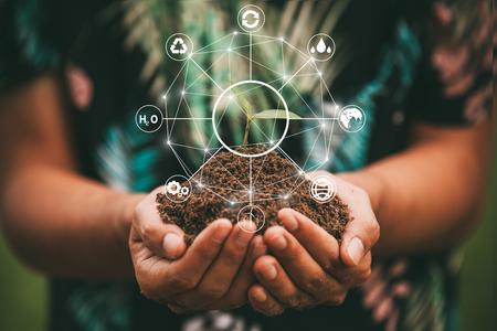 Hand, die Baum auf Naturfeldgras hält Walderhaltungskonzept, das Wortkonzept speichern