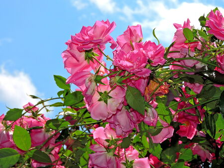 Flowers with sky background