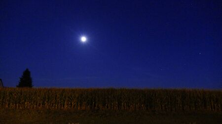champ de mais: Cornfield at night with moon