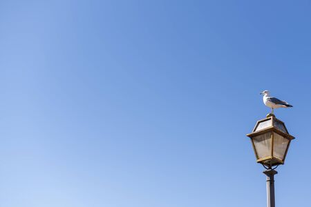 A white-gray gull sits on an old street lamp in the lower right corner of the frame against a clear blue sky in Italy