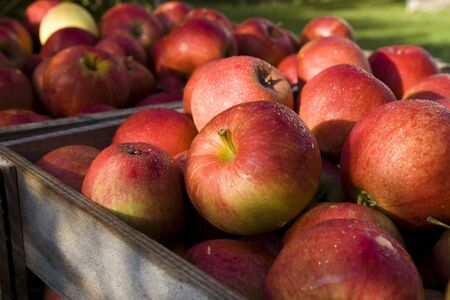 Red apple in the wood box. Autumn harwest Stock Photo - 1771802