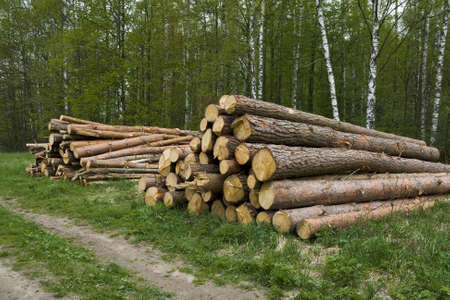 Pine logs for construction of the house. Stock Photo