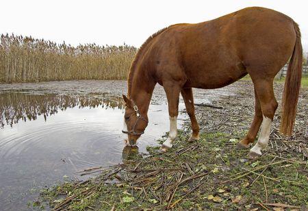 caballo bebe: El caballo bebe agua del r�o.