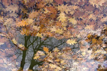 reflexion: Oto�o con las hojas del �rbol en el agua reflexi�n. Foto de archivo