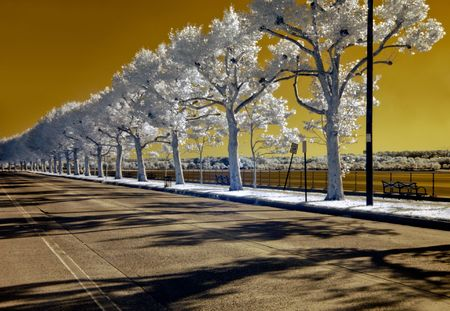 Infrared image of a deserted, tree-lined street