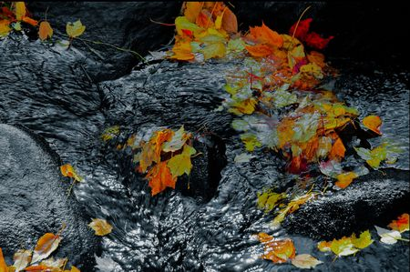 Colorful autumn leaves flowing down a black and white stream