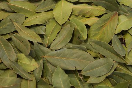 bay leaf backgound big field of resolution