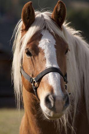 cabeza de caballo: Retrato de caballo Foto de archivo