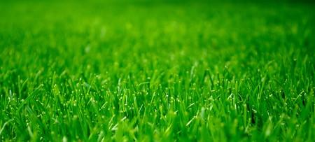 Grüne Gras  Standard-Bild - 7013662