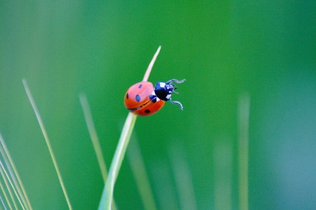 Ladybug on grass Stock Photo - 7210317