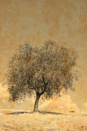 Vintage photo of a lonely olive tree in a field in summertime Archivio Fotografico