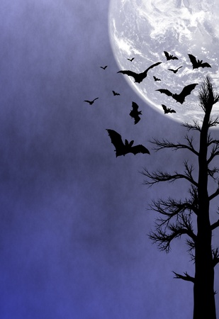 Halloween night background Stock Photo - 9944566