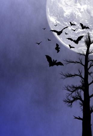 Halloween night background photo
