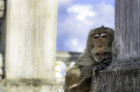 monkey close up photo