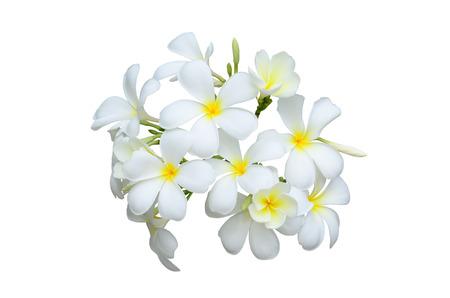 fragrant scents: Leelawadee