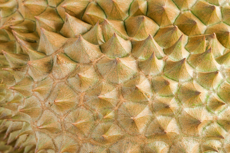 Close up durian peel the king of fruits in Thailand.