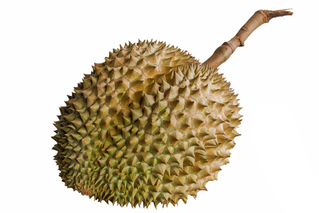 Close up durian isolated in white background. the king of fruits in Thailand.