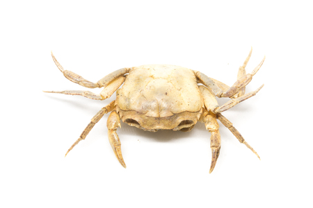 single steamed crab isolated on white background. Stock Photo