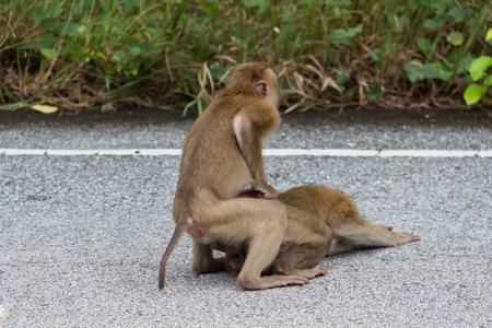 Monkeys in Ubud Sacred Monkey Forest. Bali, Indonesia Stock Photo
