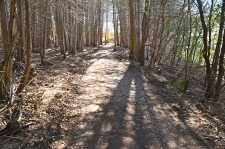 Woods Фото со стока