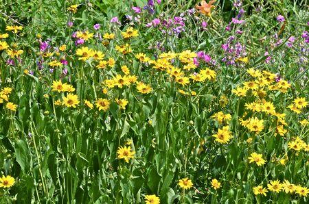 Wild Flowers Фото со стока