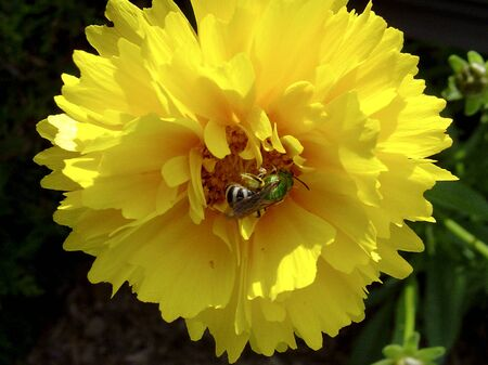 Flower Фото со стока - 19299693