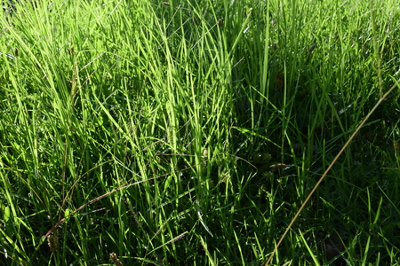 Close Up of Green Grass in a Field Banco de Imagens
