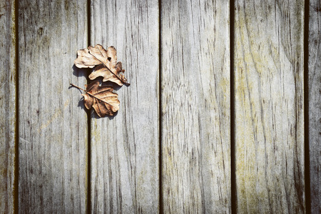 Dry Brown Autumn Leaves on a Wooden Timber Background