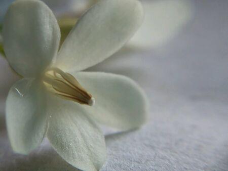 back: Spa flower Stock Photo