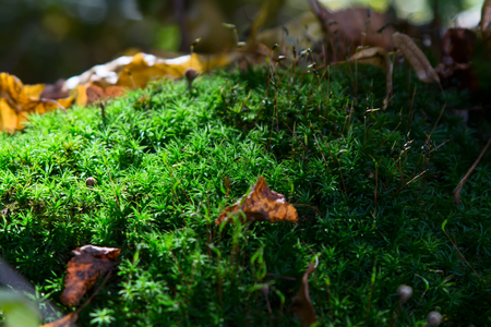 anubias: The hills are covered with moss in mixed forest. Stock Photo