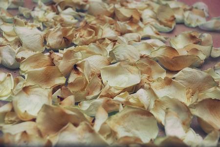 Background of dried rose petals Standard-Bild