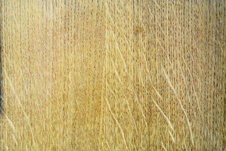 Dry tree, fir, pine. Standard-Bild