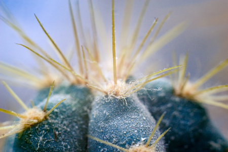 with spines: Closeup of the spines of a cactus