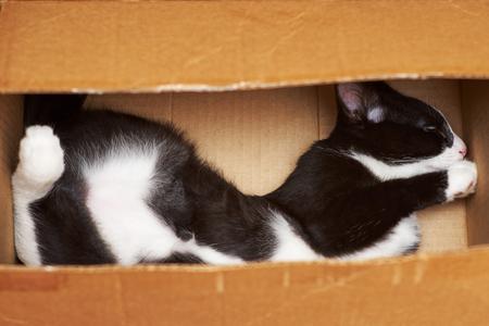 Sleeper cheerful cat. Standard-Bild