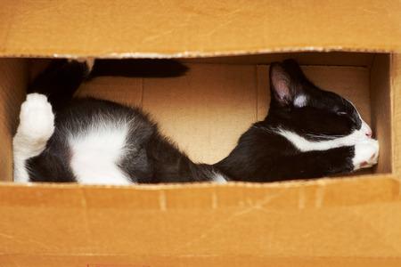 Making a funny cat.