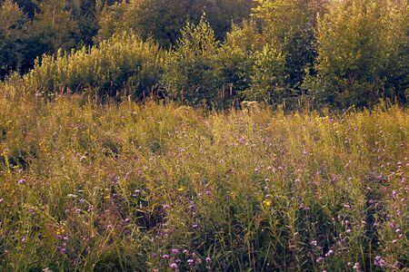 Flower meadow in sunset Standard-Bild