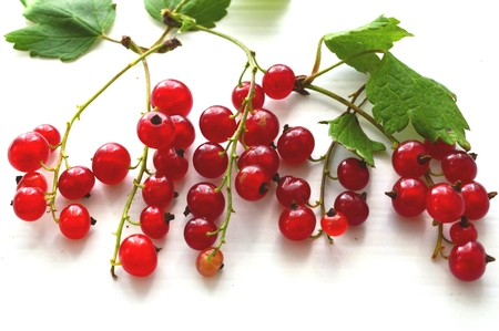 currants: red currants on a light background. Stock Photo