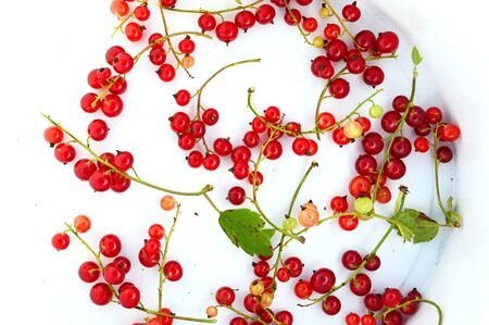 dacha: red currants on a light background. Stock Photo