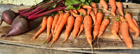 remolacha: zanahoria y remolacha.