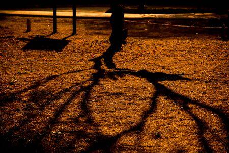 tree shadow: tree shadow