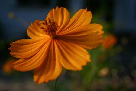 folwer: beautiful yellow flower
