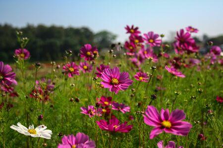 folwer: purple flower Stock Photo