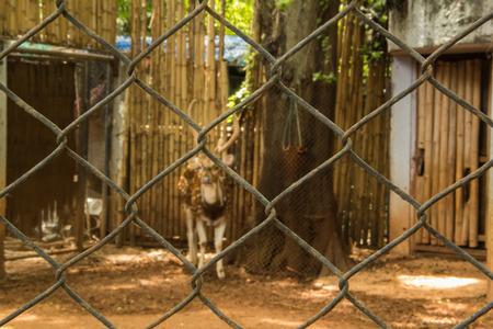 solely: a deer in the zoo