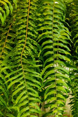 Fresh green fern leaves nature background Stock Photo