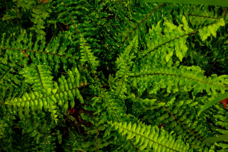 Fresh green fern leaves nature background Stock Photo