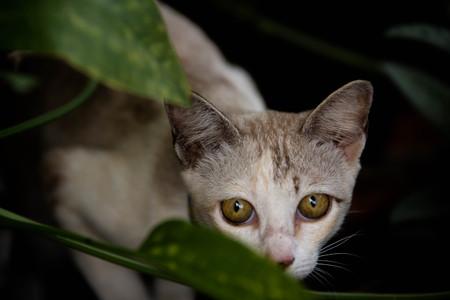 portrait of yellow eyed cat Stock Photo
